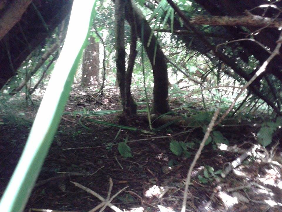 Declan,torelle and william's shelter